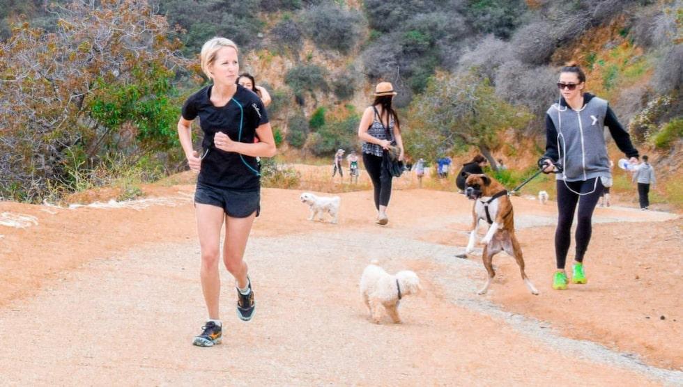 Härliga utsikter. En hajk i Runyon Canyon bjuder på utmaningar och utsikt över Los Angeles och gillas av såväl männiksor som hundar.