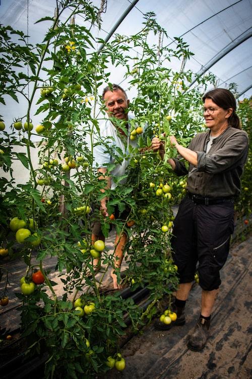 Göran och Margareta Hoas ekologiska trädgårdar på Lilla Bjers gård lockar många besökare både till restaurangen och gårdsbutiken. Försommarens sparris är eftertraktade likasom chilifrukterna, tomaterna och jordgubbarna.