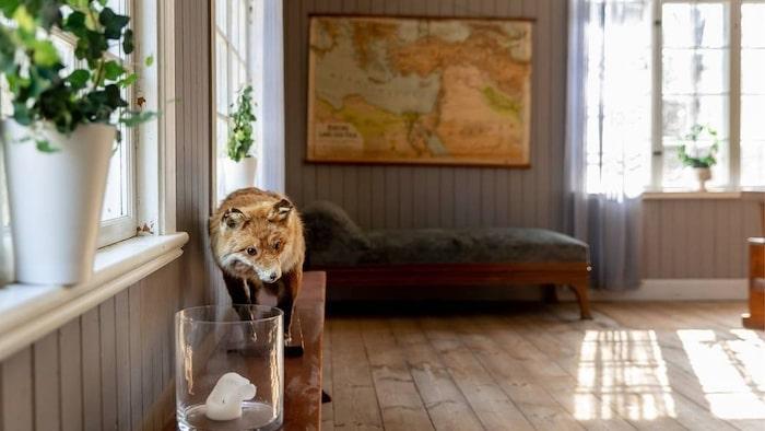 Världskartan sitter uppe på väggen i klassrummet.