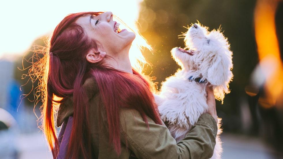 Hur mycket du än älskar ditt husdjur så kommer det alltid finnas en barriär: Språket.