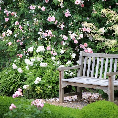 Att ha blommande buskar i trädgården är ljuvligt!