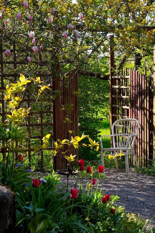 Tulpan- och magnoliablom. På våren tål vi mycket färg. Det är efterlängtat efter en lång, mörk vinter.