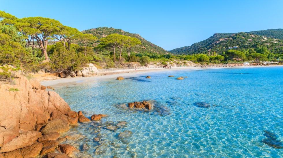 Stranden Palombaggia beach på Korsika i Frankrike.