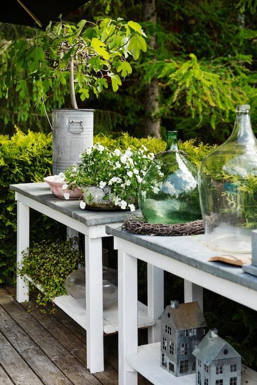 De vita borden med en yta av zink har Göran byggt. Här nere står också ett stort fikonträd i en zinktunna.
