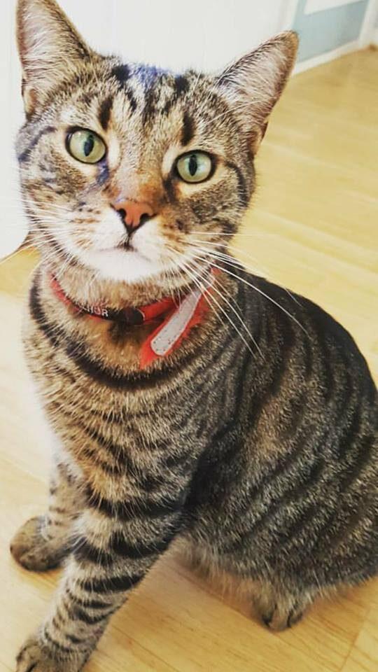 Huskatten Bosse är mestadels utomhus och inte så intresserad av ett katt-träd.