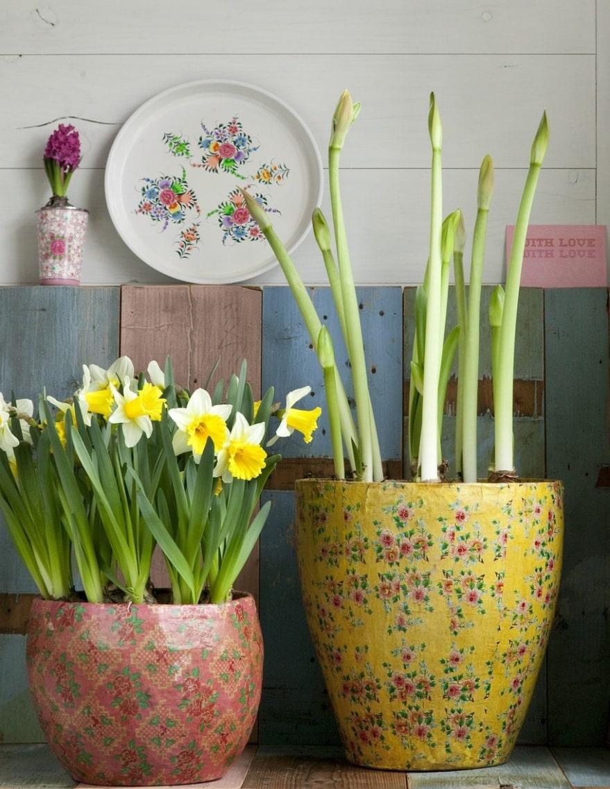 Fint i köket. Passa på och gör så blommigt du kan hemma i köket. Blommiga krukor med pingstliljor och amaryllis i knopp.