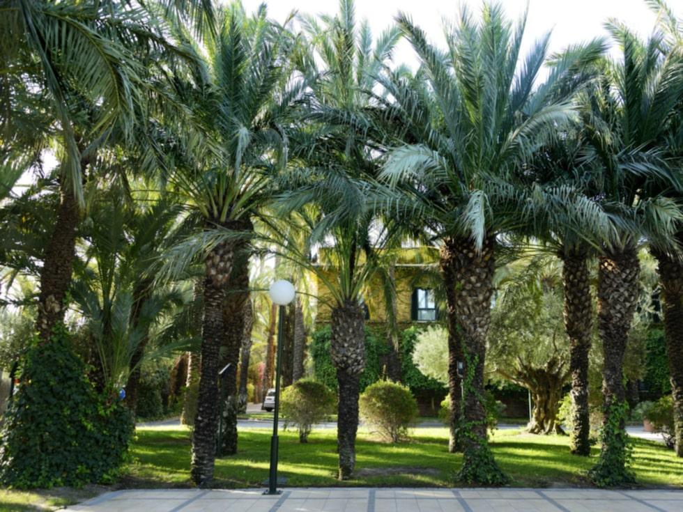 Elche, palmernas stad, är perfekt för en cykeltur.