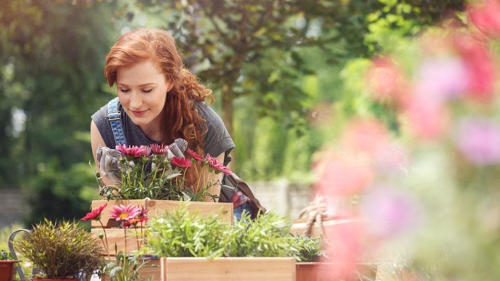 Det finns många hälsofördelar med att odla själv.