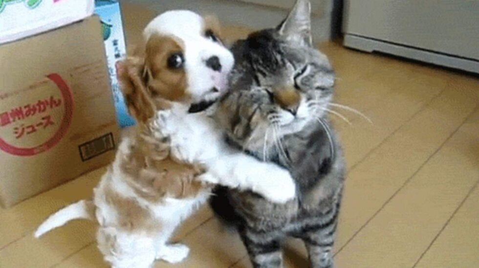 """Yay, en kompis i nya hemmet!"""