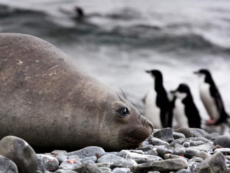 Antarktis är den sista vildmarken. En vit värld där naturkrafterna, djuren och stillheten regerar.