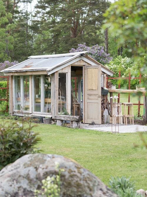 Växthuset har Linda byggt av gamla fönster som fanns på gården.