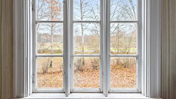 Vackra fönster med enkelglas och utsikt över natur.