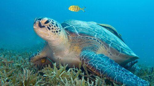 Egypten lockar dykare och snorklare.