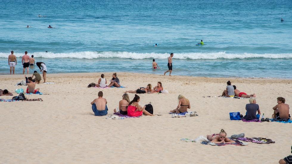 I delstaten Queensland, längs Gold Coast och Sunshine Coast har giftmaneter invaderat kusterna.