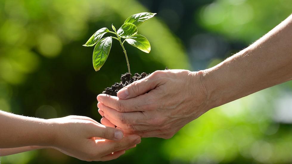 Det finns flera växter som är bra att ha hemma för den som vill få bättre luft. Här tipsar vi om några gröna växter du borde skaffa.